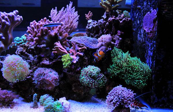 led-aquarium-beleuchtungfZeL6rzIoUV7U
